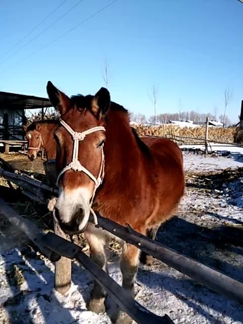 壁纸 动物 马 骑马 480_640 竖版 竖屏 手机