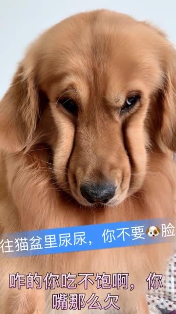 相中二狗新盆了……二狗在底下吃饭呢!对着二狗盆尿尿!你说他欠不欠!无水印高清douyin