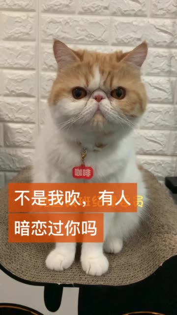 高手在民间 猫  @快手宠物(O40300091) @快手小管家(O40300028)无水印高清douyin