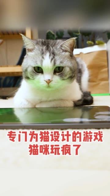 让大家见识一下电竞猫咪的厉害!\n萌宠 生活方式无水印高清抖音电脑版