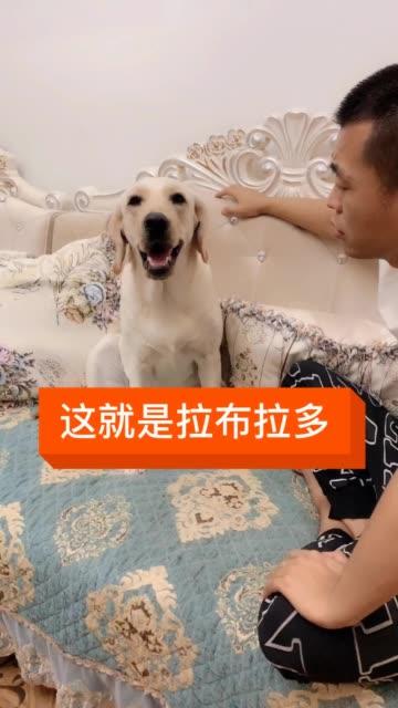 萌宠 汪星人  @快手宠物(O40300091)无水印高清热门短视频