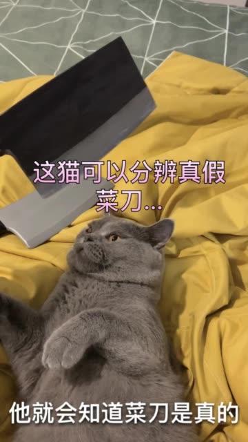 猫精啊?无水印高清短视频