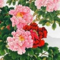 1001_15564361369_avatar